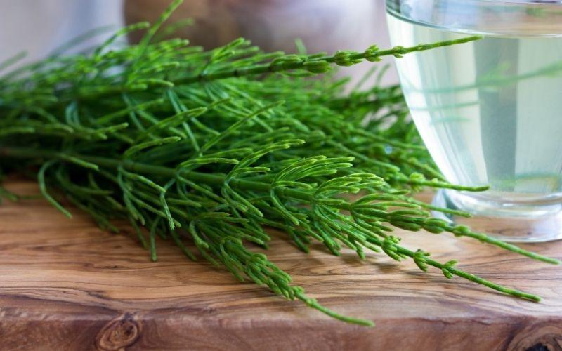 Equiseto, benefici e utilizzi di una pianta antica