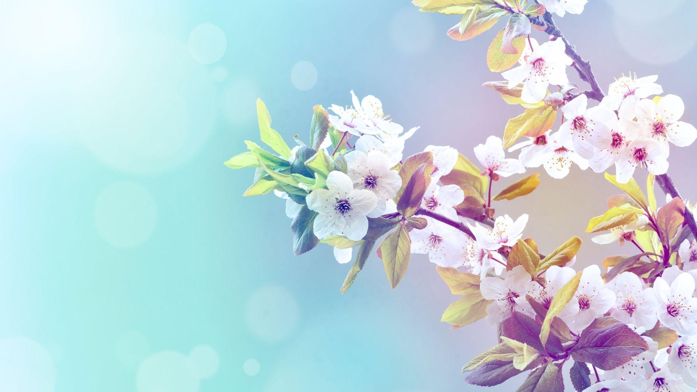 Stanchezza di primavera: 4 consigli per una rinascita felice